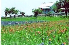 Texas Flowers