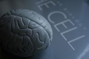Alcohol and Developmental Brain Damage
