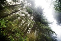 Majestic redwood forests surround the recovery camp
