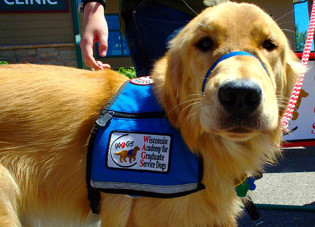 Can Service Dogs Still Be Pet