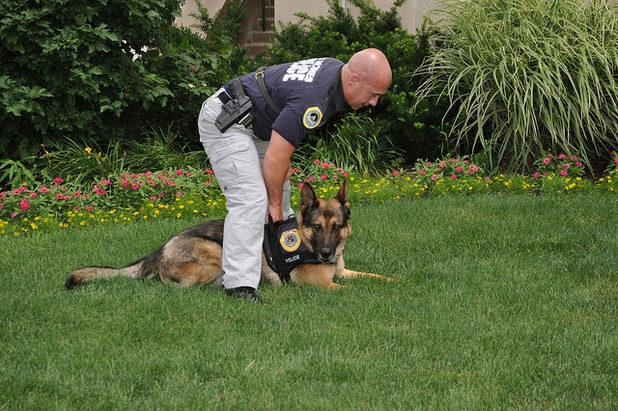 K9 Drug Dogs for Hire to Parents